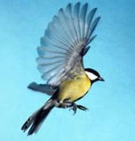 Bird_180