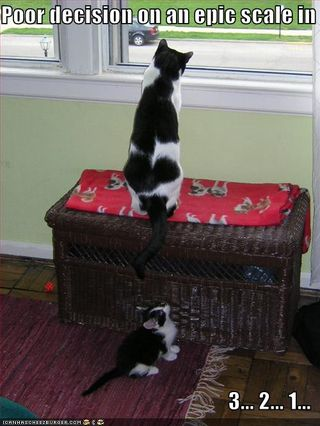 Funny-pictures-kitten-makes-a-poor-decision