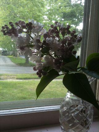 Lilacs 009